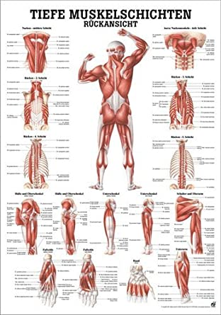 ruediger Anatomía mipo37 Profundidad muscular capas Pizarra, de la ...