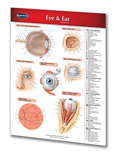 Eye & Ear Chart - Medical - Quick Reference Guide by - Detailed Eye Diagram
