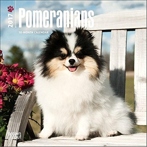 Pomeranians Calendar 2017 - Deluxe Small Mini Wall Calendar (7x7)