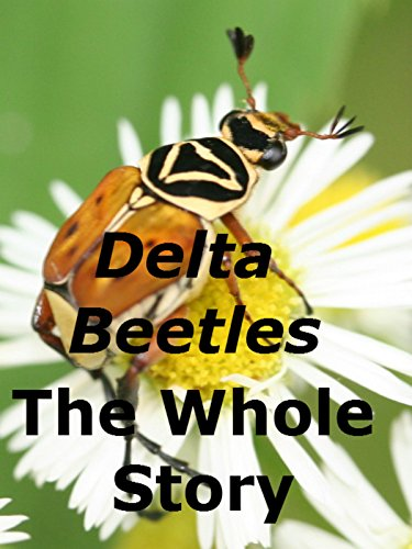delta-beetles-the-whole-story
