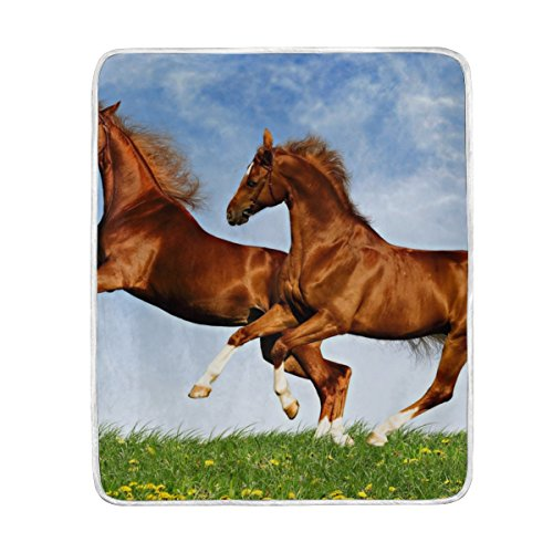 ALIREA Two Horses Frolic On The Plain Super Soft Warm Blanket Lightweight Throw Blankets for Bed Couch Sofa Travelling Camping 60 x 50 Inch for Kids Boys (Frolic Horse)