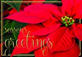"""Festive Christmas Holiday Red Poinsettia """"Seasons Greetings"""" Cards with Envelopes - 12 Count"""
