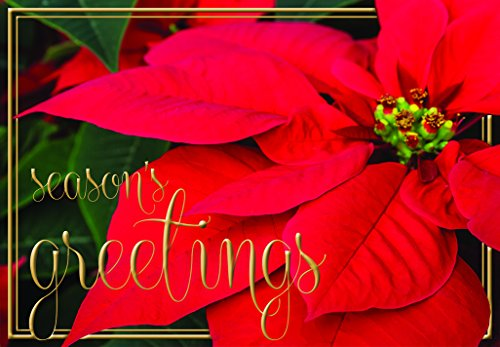 12 Count Holiday Greeting Cards - Season's Greetings - Elegant Red Poinsettia Designed Paper Greeting Cards with Envelopes - 4 x 6 Inches
