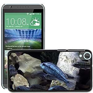 Hot Style Cell Phone PC Hard Case Cover // M00115857 Degeni Cichlid Sea Life Sea Marine // HTC Desire 820