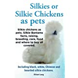 Silkies or Silkie Chickens as pets. Silkie Bantams facts, raising, breeding, care, food and where to buy all covered. Including black, white, Chinese and bearded silkie chickens.