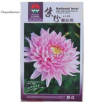 Amazon seeds market rare heirloom zi fen pink chrysanthemum seeds market rare heirloom zi fen pink chrysanthemum original pack 40 seeds mightylinksfo
