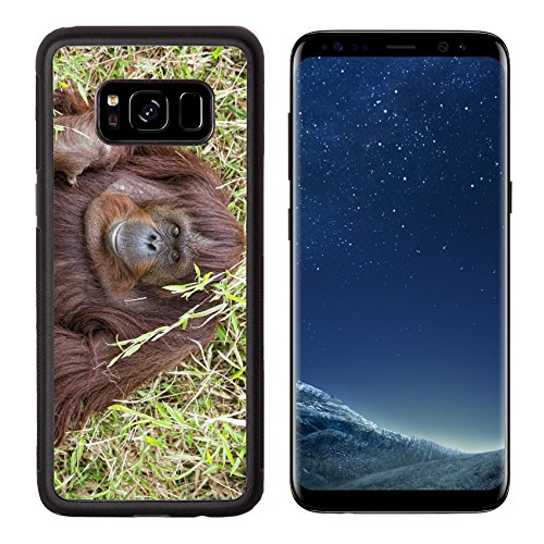 Luxlady Premium Samsung Galaxy S8 Aluminum Backplate Bumper Snap Case Image Id  32011941 Orangutan Portrait While Looking At Yuo