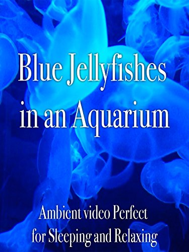 Blue Jellyfishes in an Aquarium Ambient Video Perfect for Sleeping and Relaxing (Jellyfish Video)