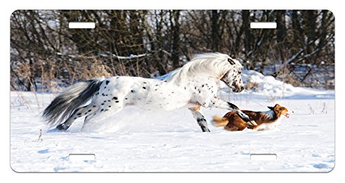 Lunarable Horses License Plate, Legendary Appaloosa Pony and Sable Border Collie Runs Gallop in Winter Photo Print, High Gloss Aluminum Novelty Plate, 5.88 L X 11.88 W Inches, Multicolor