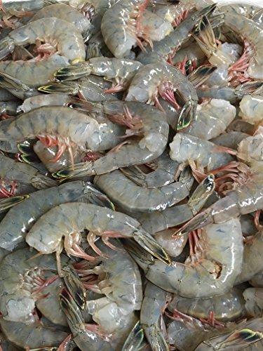 Fresh Jumbo Shrimp, 2 Lbs