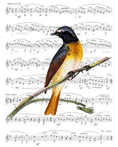 Original Audubon Artwork - 1