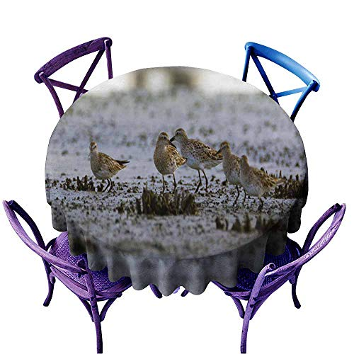 Acelik Resistant Table Cover,Birds Queensland Waders,for Banquet Decoration Dining Table Cover,60 INCH