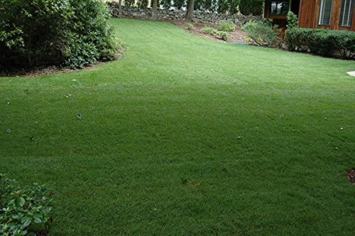 Nature's Seed Northeast Grass Seeds Blend, 2000 sq. ft. (Best Grass Seed For New England Climate)