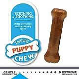 Nylabone Puppy Starter Kit Dog Chew Toys & Treat