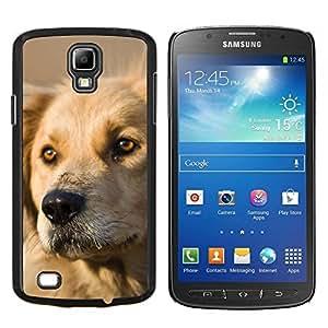 EJOOY---Cubierta de la caja de protección para la piel dura ** Samsung Galaxy S4 Active i9295 ** --Perro del labrador retriever de oro canina mascotas