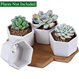 Unibene 2.8 Inch White Ceramic Contemporary Hexagon Cactus Succulents Pots with Bamboo Tray and Drainage Hole, Indoor Bonsai Planters Containers, Decor for Home Office Garden Kitchen - 4 Pack