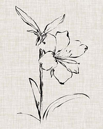 Floral Ink Study I by Ethan Harper Art Print, 13 x 16 inches