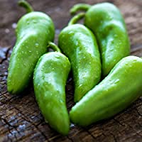 Chilli Jalapeno 10+ Chilli Seeds MILD HOT Spices Spicy Pepper Chile Vegetable