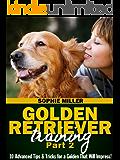 Golden Retriever Training, Part 2: 10 Advanced Tips & Tricks for a Golden That Will Impress!