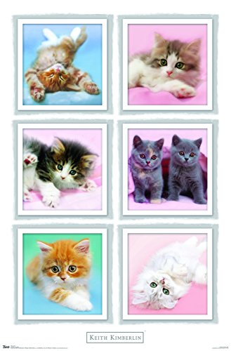 Trends International Kimberlin Kittens Wall Poster 22 375  X 34