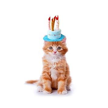Bello Luna Sombrero de cumpleaños para Mascotas Sombrero de ...