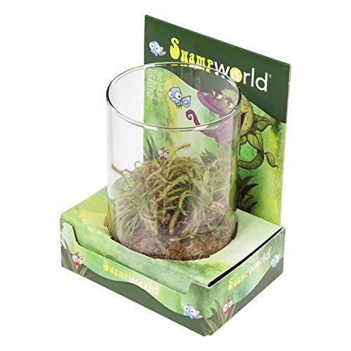 FloraAtHome - Marsh plants - Drosera Hybrid - Sundew, in Decoglas