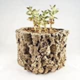 Cork Bark Planter Review