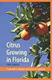 Citrus Growing in Florida