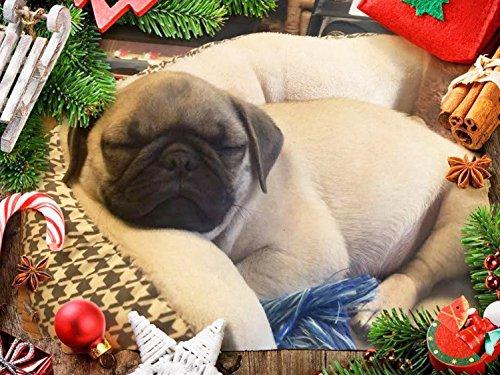 Package of Four (4) Christmas Season's Greetings Pug