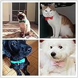 CatYou 6 PCS Pet Cat Dog Bowknot Collar Bow Tie