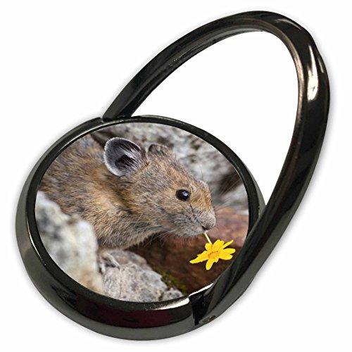 3dRose Danita Delimont - Wildlife - Washington, North Cascades NP, Pika Wildlife - US48 BJA0235 - Jaynes Gallery - Phone Ring (phr_95158_1)