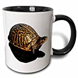 Shadow Box Coffee Table 3dRose Susans Zoo Crew Animals Turtle - Florida Box turtle Photograph with Shadow Cutout - 15oz Two-Tone Black Mug (mug_156237_9)
