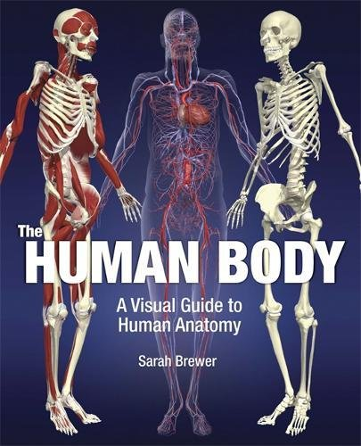 The Human Body: A Visual Guide to Human Anatomy
