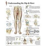 Understanding the Hip & Knee chart: Wall Chart