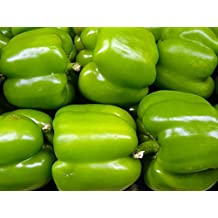 200 BIG GREEN BELL PEPPER Sweet Capsicum Annuum Vegetable Seeds *Flat Shipping