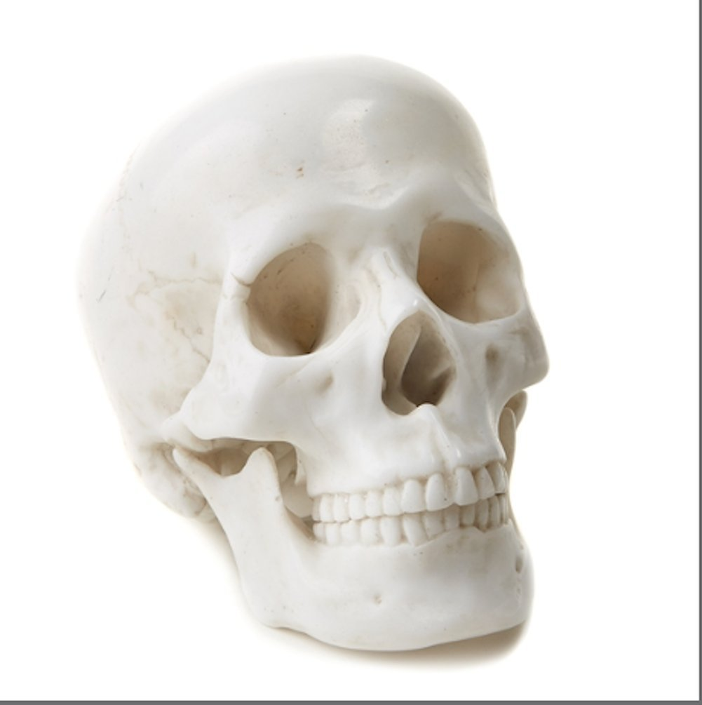 Tozai Twos Company Home Calva Decorative Skull Rare