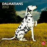 Dalmatians 2013 Square 12X12 Wall Calendar (Multilingual Edition)