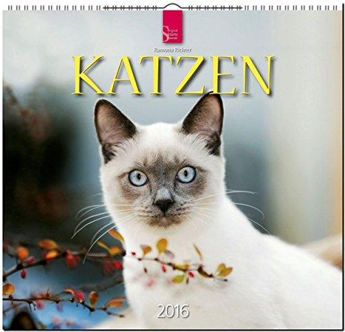 Katzen 2016: Original Stürtz-Kalender - Mittelformat-Kalender 33 x 31 cm [Spiralbindung]
