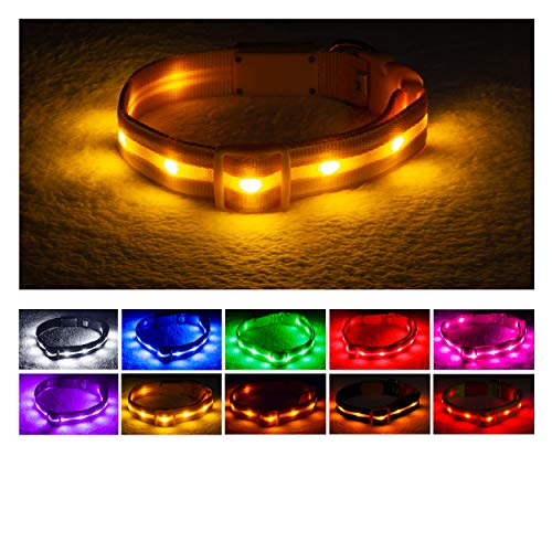 Blazin Safety LED Dog Collar - USB Rechargeable with Water Resistant Flashing Light - Large Yellow