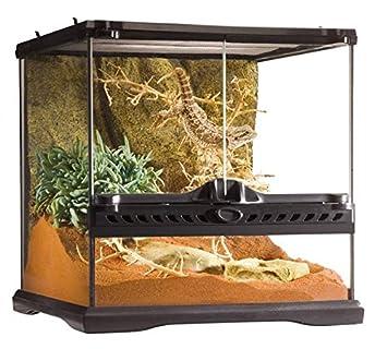 terrarium serpent en verre