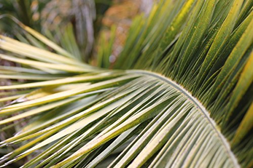 palm-tree-branches