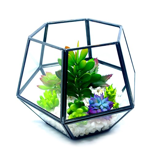 Cvens Clear Glass Terrariums,Geometric Terrariums,Geometric Air plants terrarium,Succulent planters,Artficial Plants Air Plant Geometric Terrariums Holder for Tabletop Succulent Plants Holder