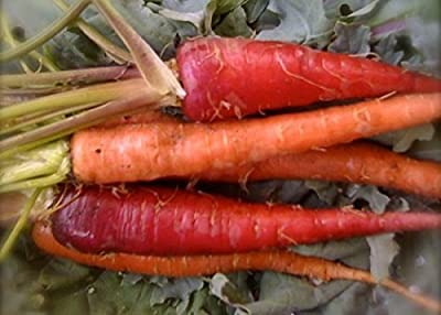David's Garden Seeds Carrot Atomic Red D119CAR (Red) 500 Heirloom Seeds