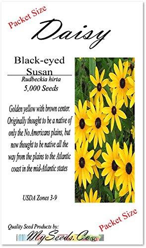 5000 x BLACK EYED SUSAN Flower Seeds ~ Rudbeckia hirta - SELF RESEEDS ~ PERFECT GOLDEN CUT FLOWERS - Zones 3-9 - By MySeeds.Co