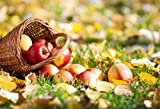 CSFOTO 5x3ft Background for Fresh Ripe Apples in the Basket Harvest on Orchard Photography Backdrop Fresh Fruit Natural Garden Rural Rustic Season Countryside Photo Studio Props Wallpaper