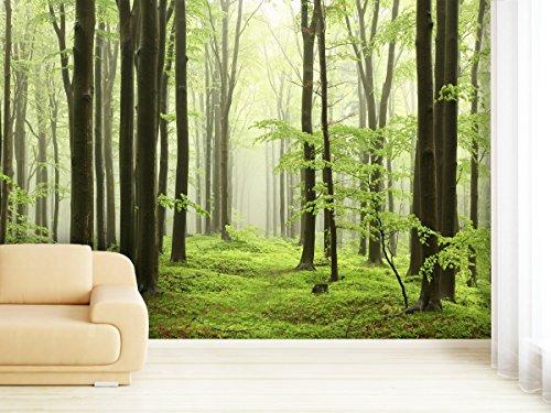 Fototapete Beech Forest in verschiedenen Größen - als Papiertapete oder Vliestapete wählbar - PVC frei, geruchloser, umweltfreundlicher Latexdruck ohne Lösemittel - Motivtapete Postertapete Bildtapete Wall Mural von Trendwände