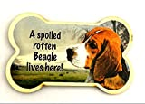 Beagle Dog Magnet, A Spoiled Beagle Lives Here! Bone Shaped Fridge Magnet