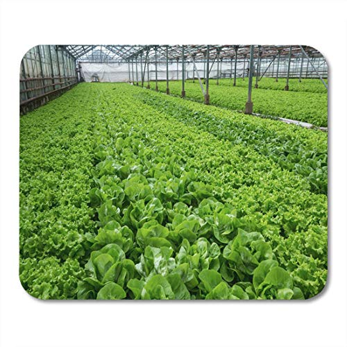 Lettuce Greenhouse - Mouse Pad Farm Lettuce Green Salad Greenhouse Modern Agricultural Beautiful Bunch Mousepad for Notebooks,Desktop Computers Mouse Mats, Office Supplies