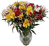 American Grown Alstroemeria - Fresh Cut Flowers - Single Bouquet - 25 Stems - Free Fast Shipping
