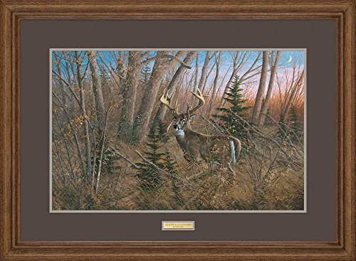 The Glory Days; Old Mossy Horns - Whitetail Deer Framed Limited Edition Print by Michael Sieve
